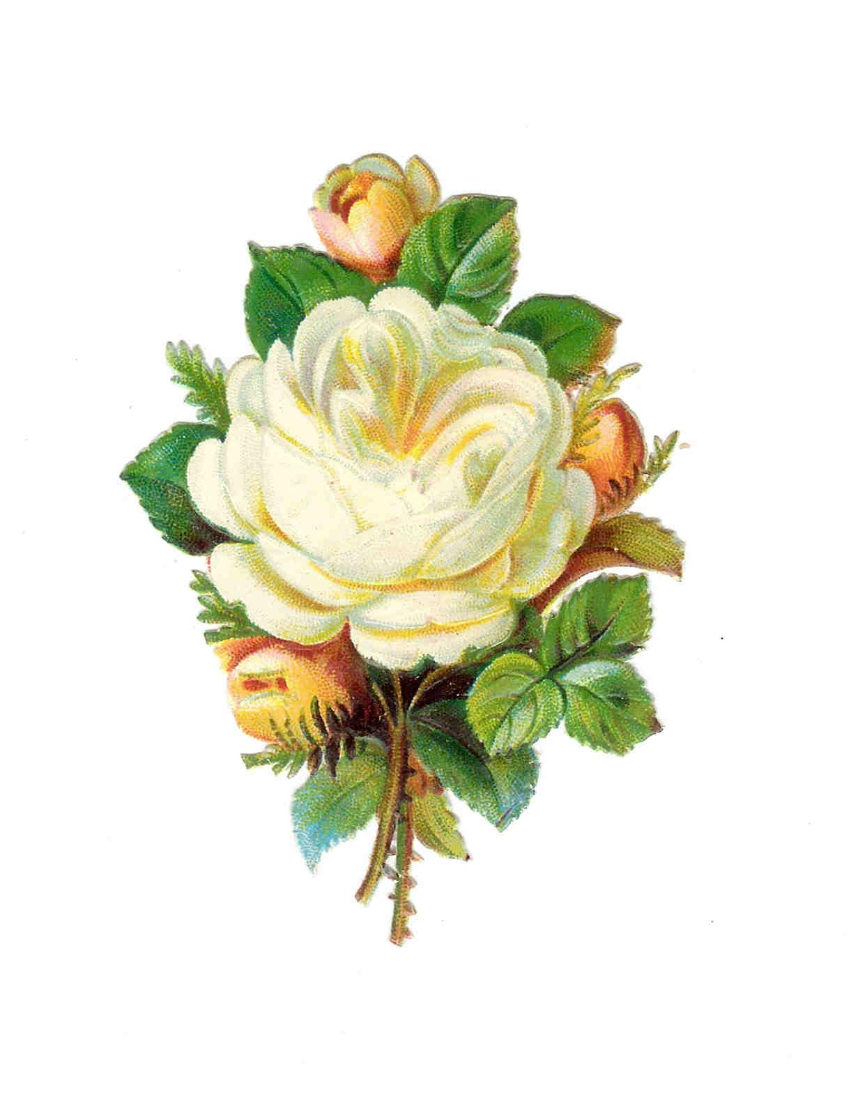 Vintage Flower clipart vintage love Free Images: Free Frame Rose