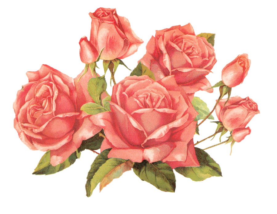 Rose clipart png tumblr #6