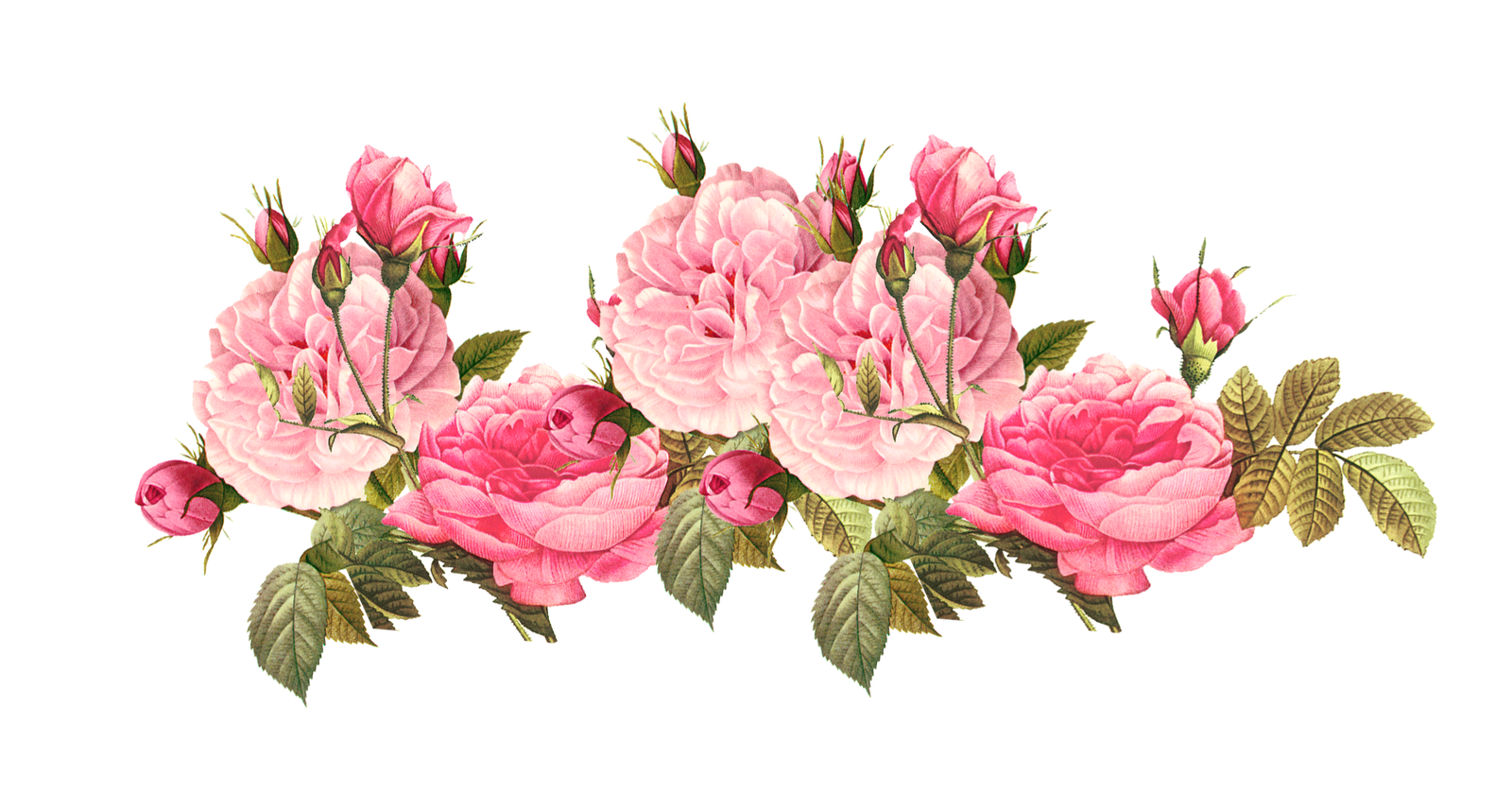 Rose clipart png tumblr #1