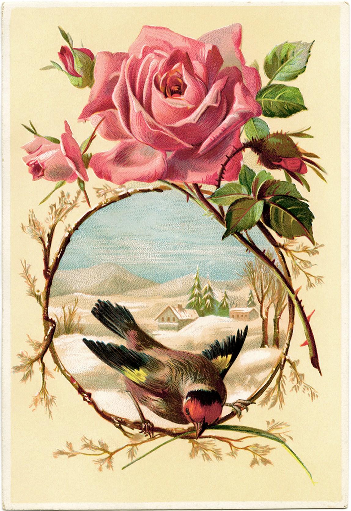 Card vintage Victorian bird art