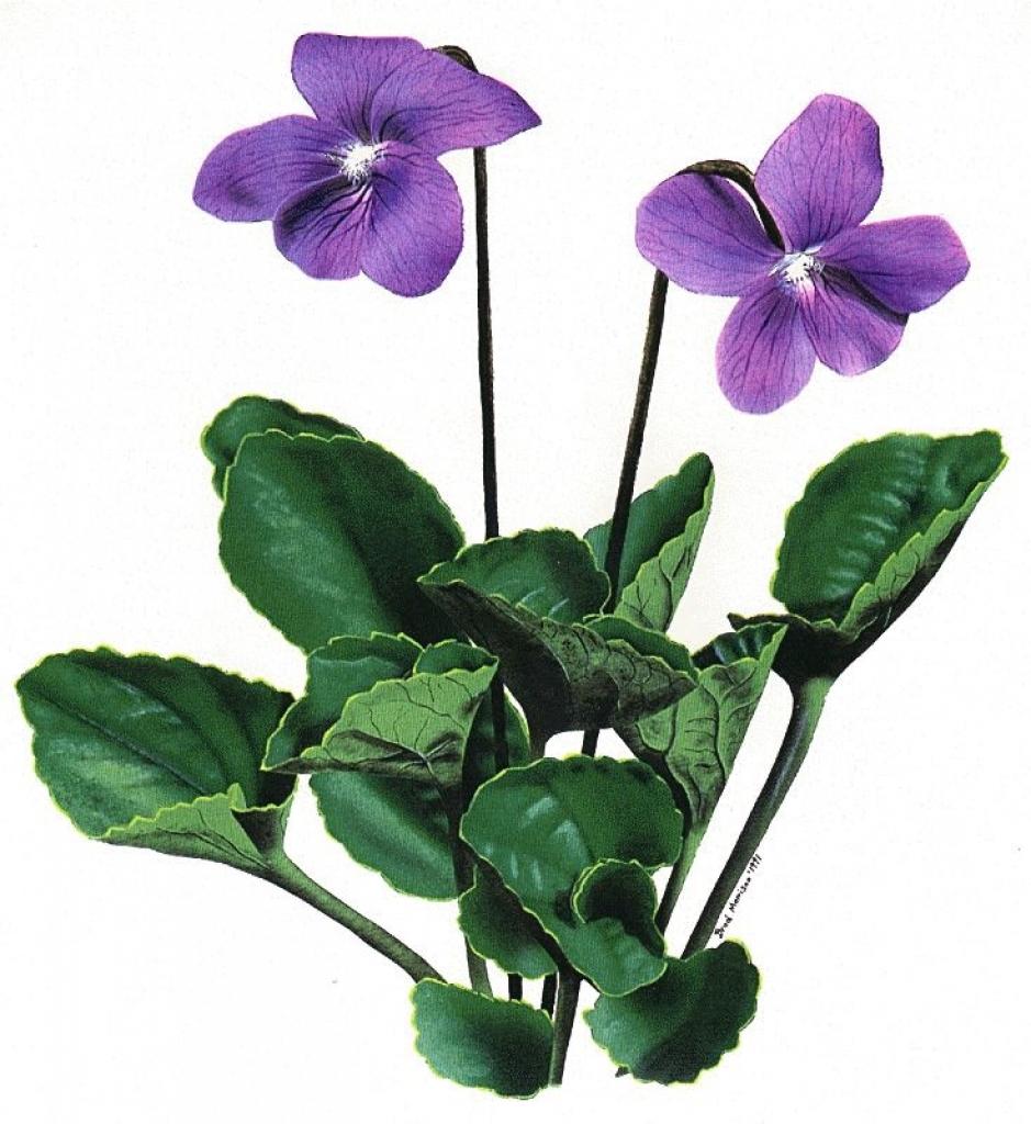 Violet clipart 6 clip flower crafts inspiration