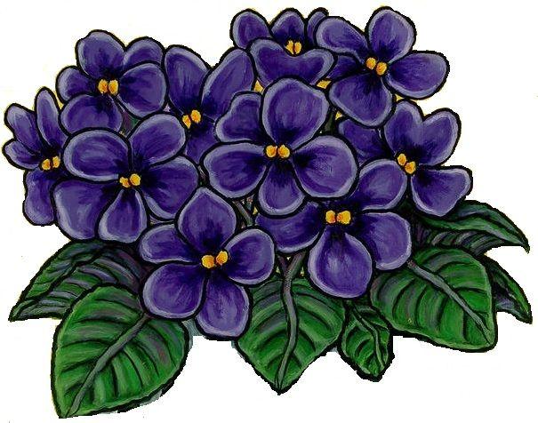Buttercup clipart african violet Art 66 Clipart Fans violet
