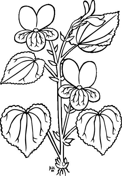 Plant clipart colouring Clip vector Coloring Stream com