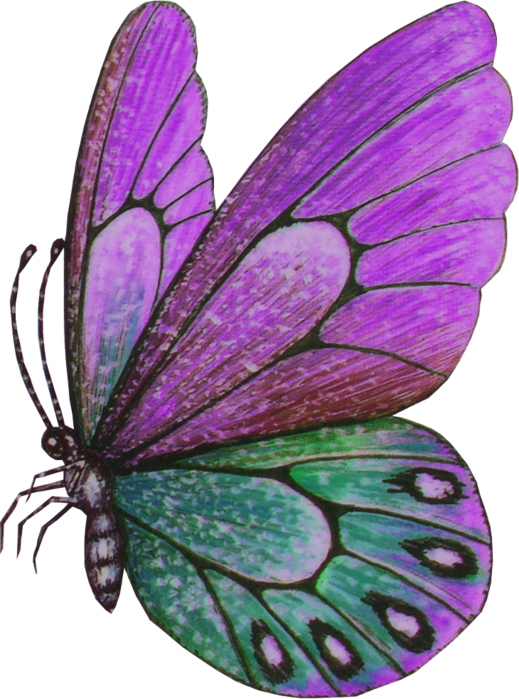 Papillon clipart bug ETC Patterns  E ETC