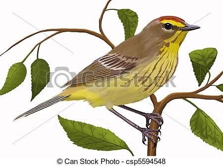 Vireo clipart Stock palmarum) Warbler Illustrations eastern