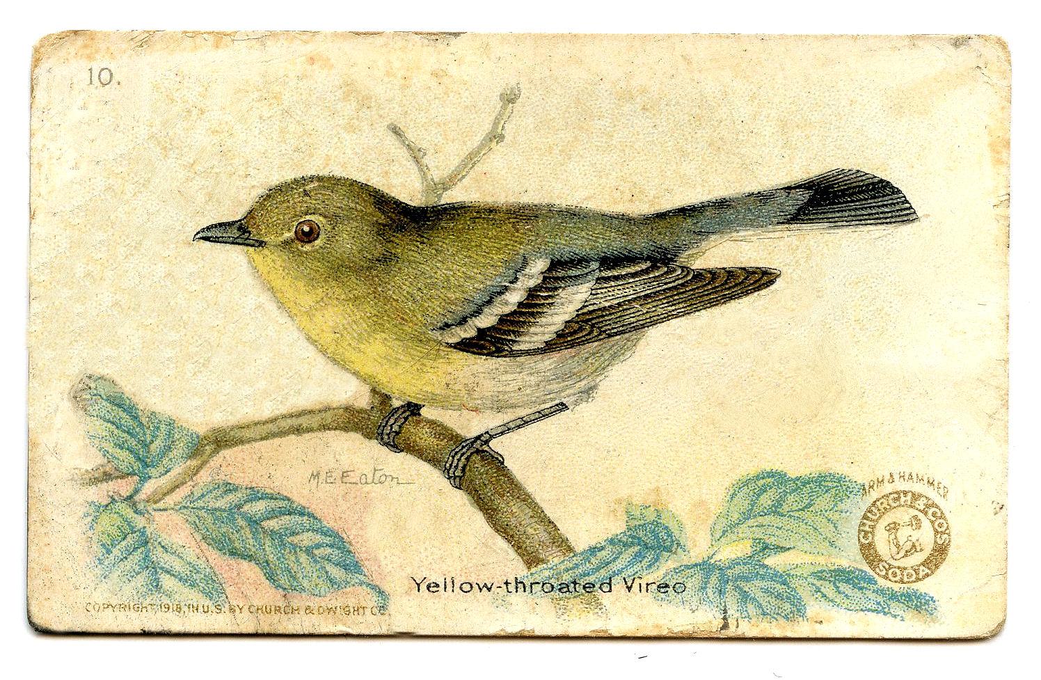 Vireo clipart Vintage Birds Free Clipart Birds