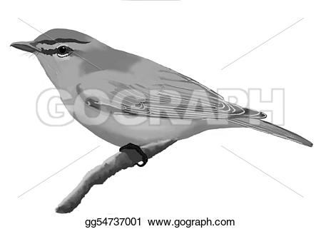 Vireo clipart Clipart GoGraph Drawing Red Drawing