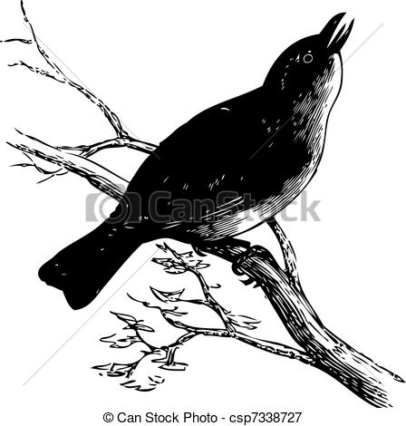 Vireo clipart Olivaceus vintage Vireo engraving eyed
