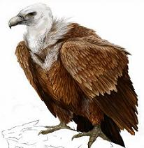 Vulture clipart Clipart Vulture Vulture Free
