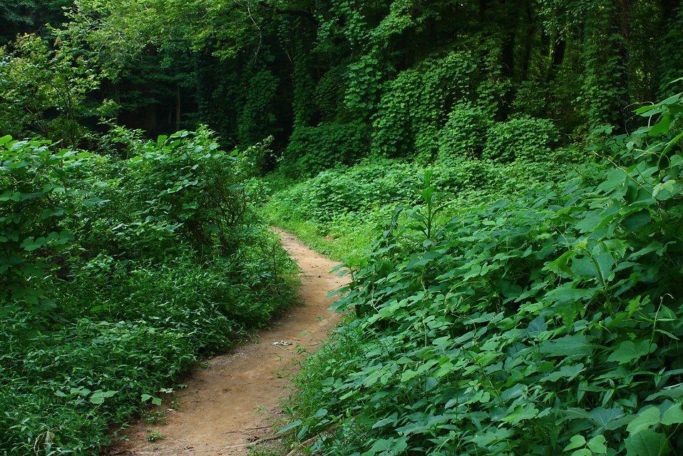Wood clipart dirt path : overgrown Path Photo through
