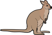 Wallaby clipart Clipart Size: 50 Marsupial Kb