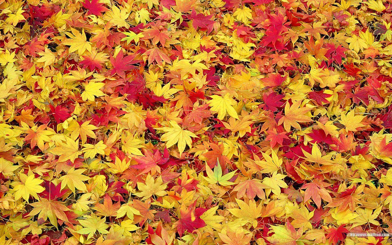 Wallpaper clipart autumn Fall desktop Hd collection Clipground