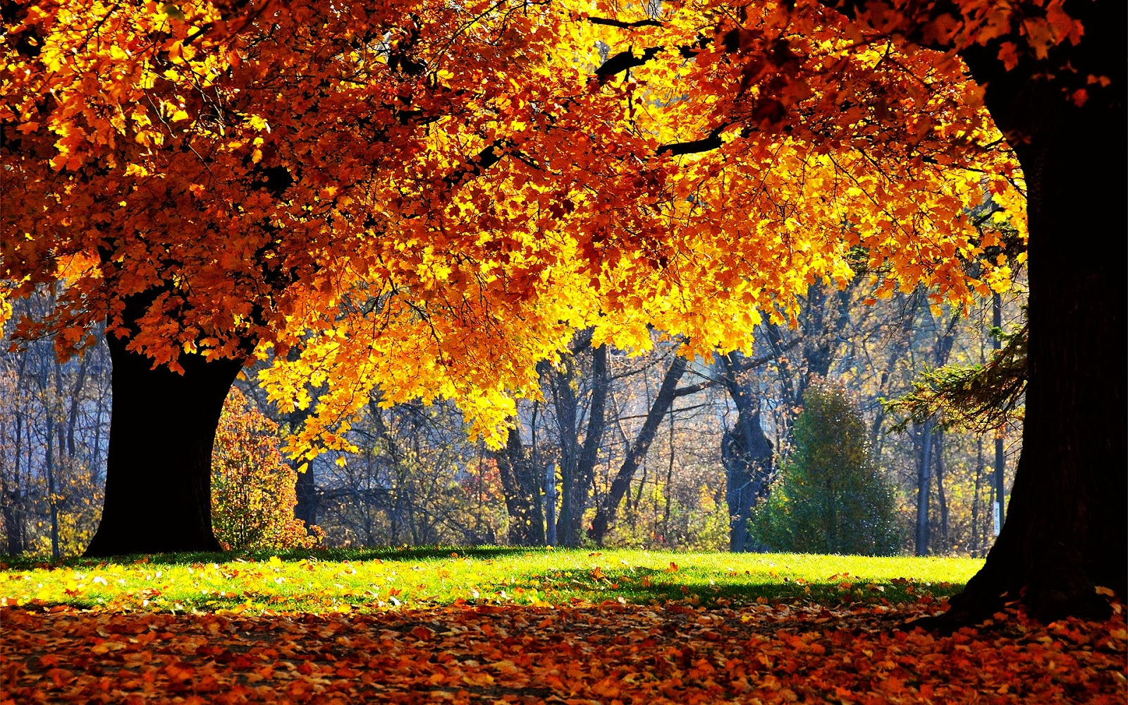 Wallpaper clipart autumn Hd in Clip collection clipart
