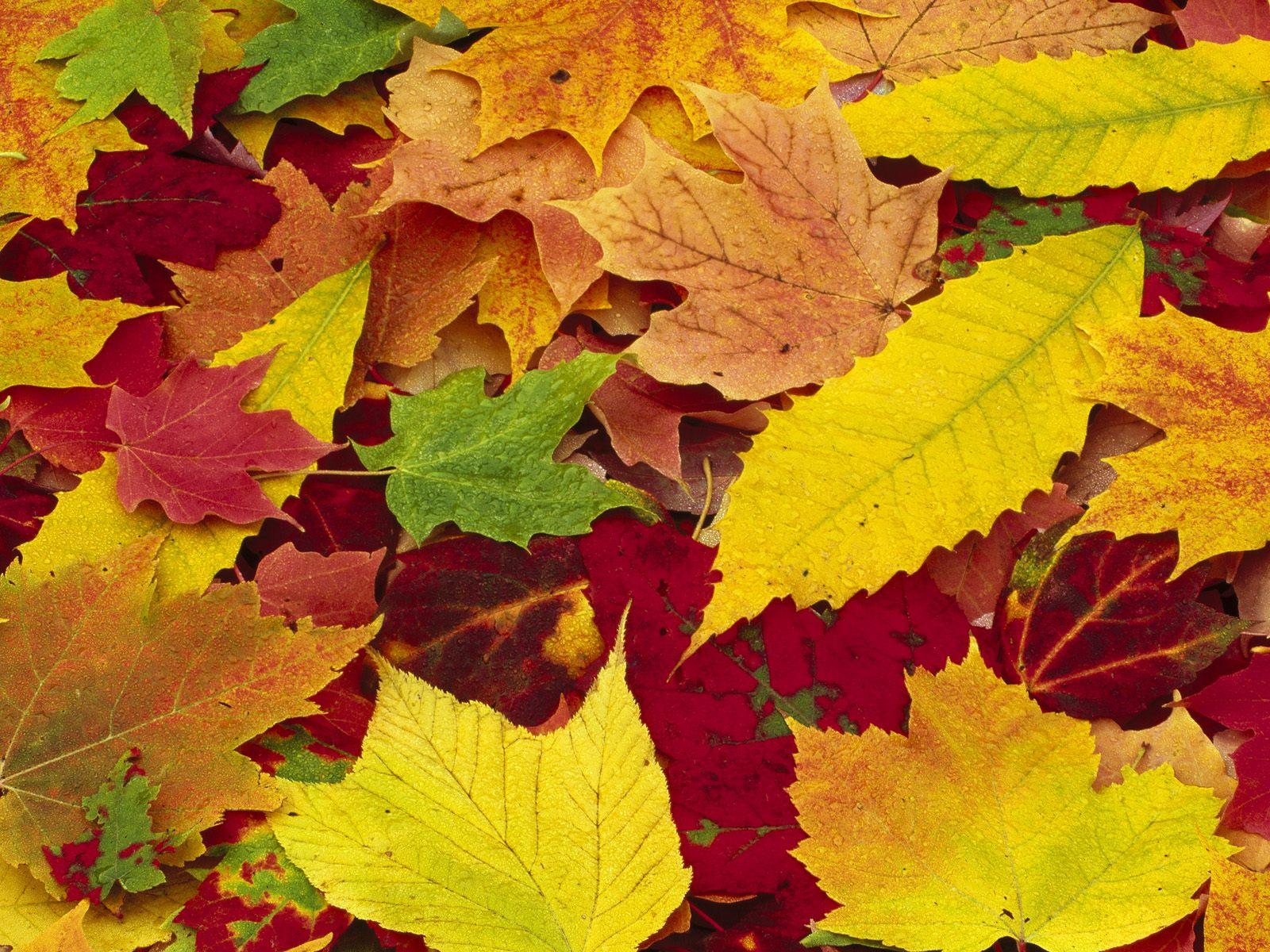 Wallpaper clipart autumn Leaves Leaves  Autumn wallpaper