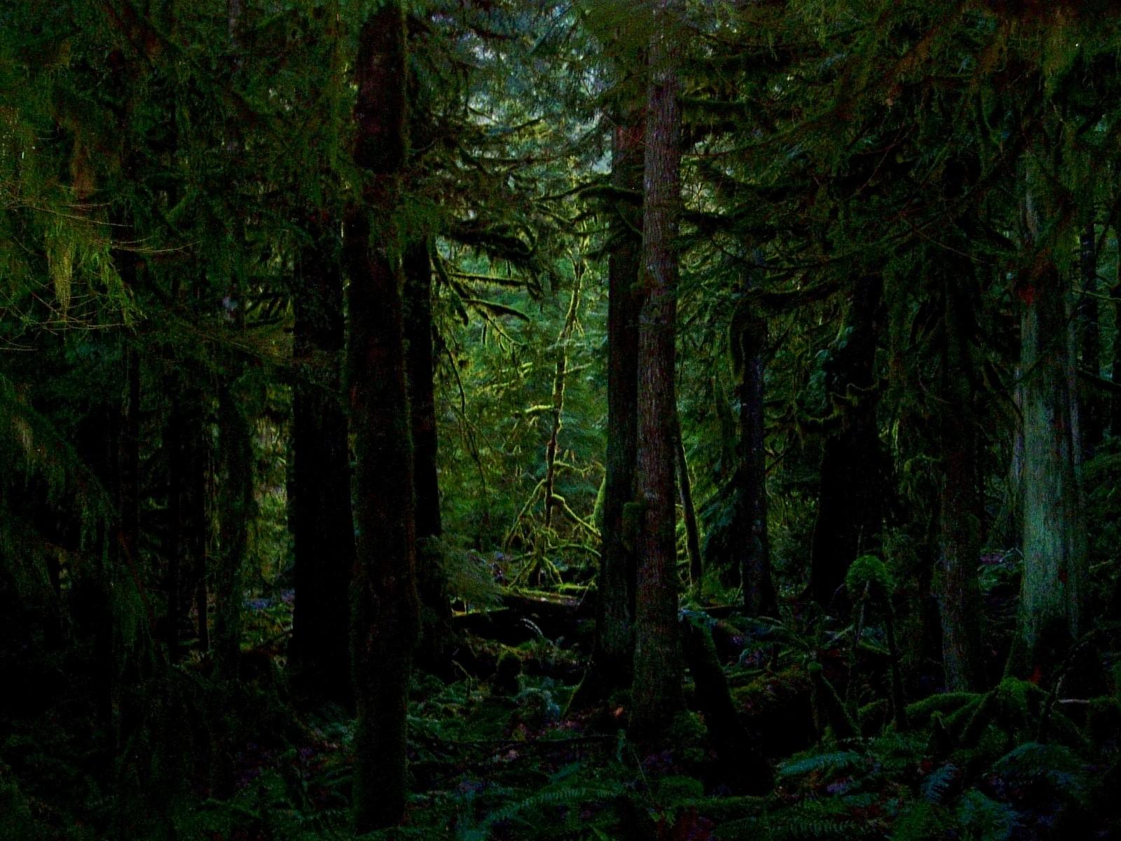 National Park clipart dark forest #2
