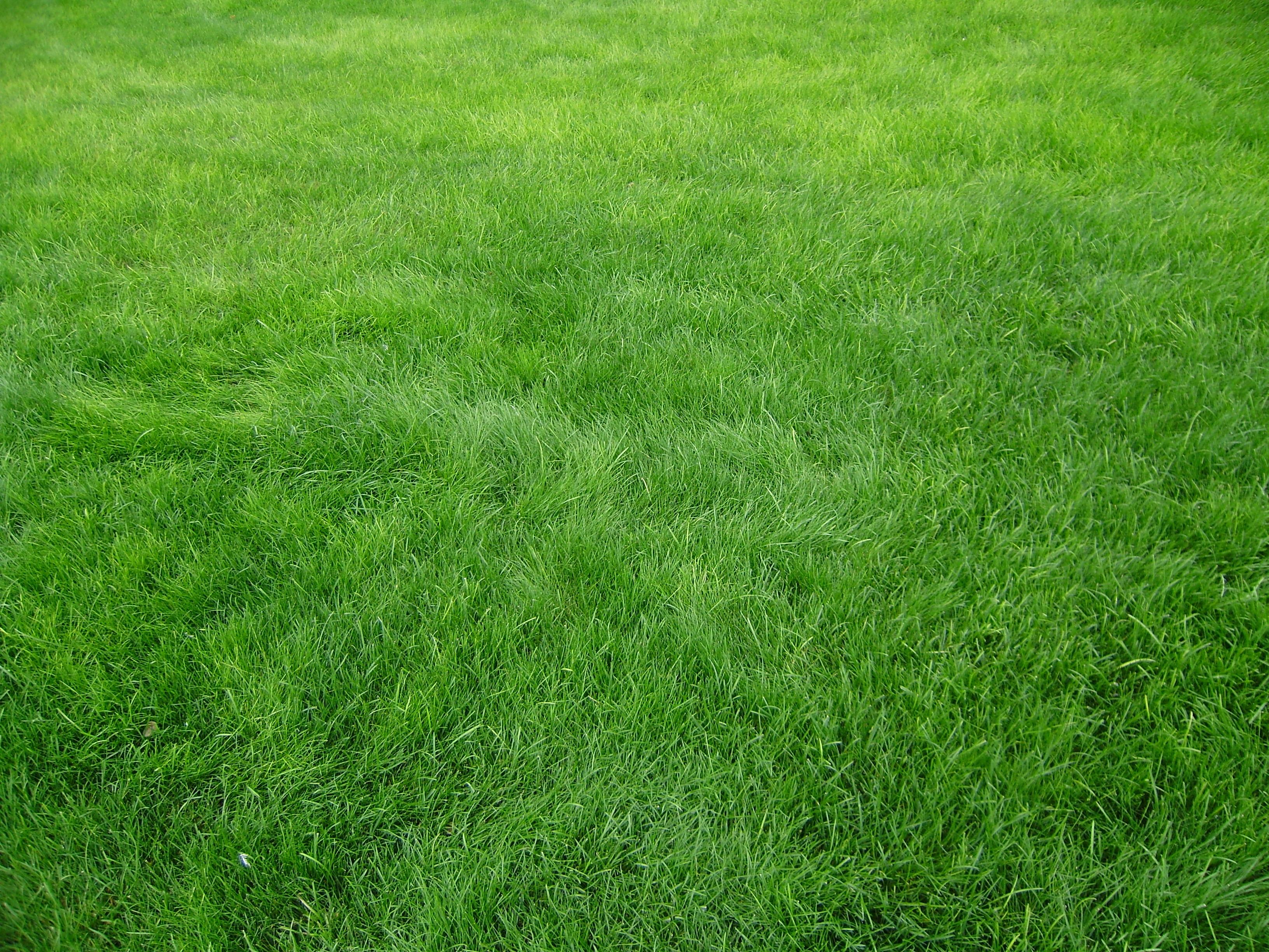 Feilds clipart grass field Find field field clipart grass