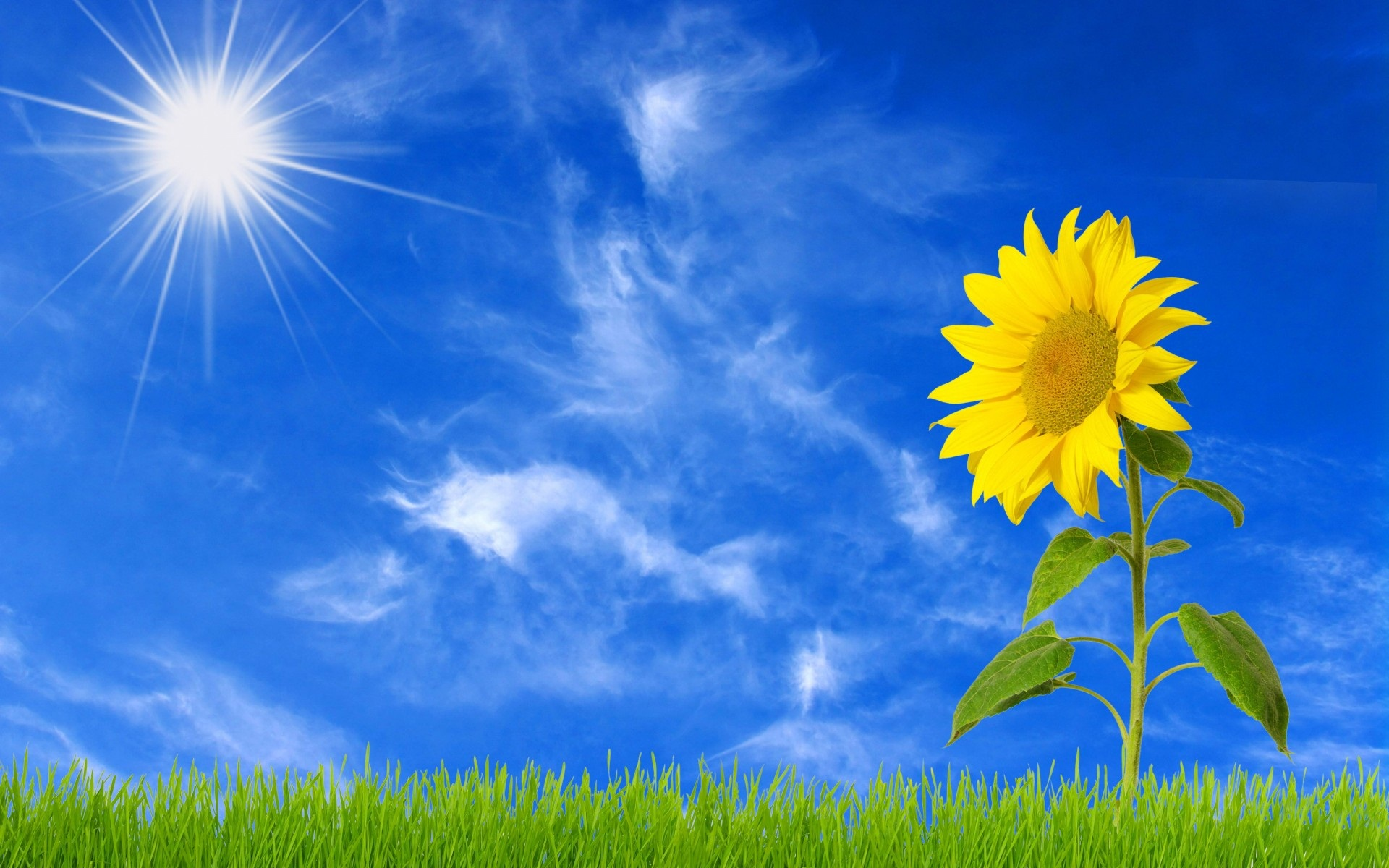 Sunflower clipart wallpaper Very Field  Very Resolution