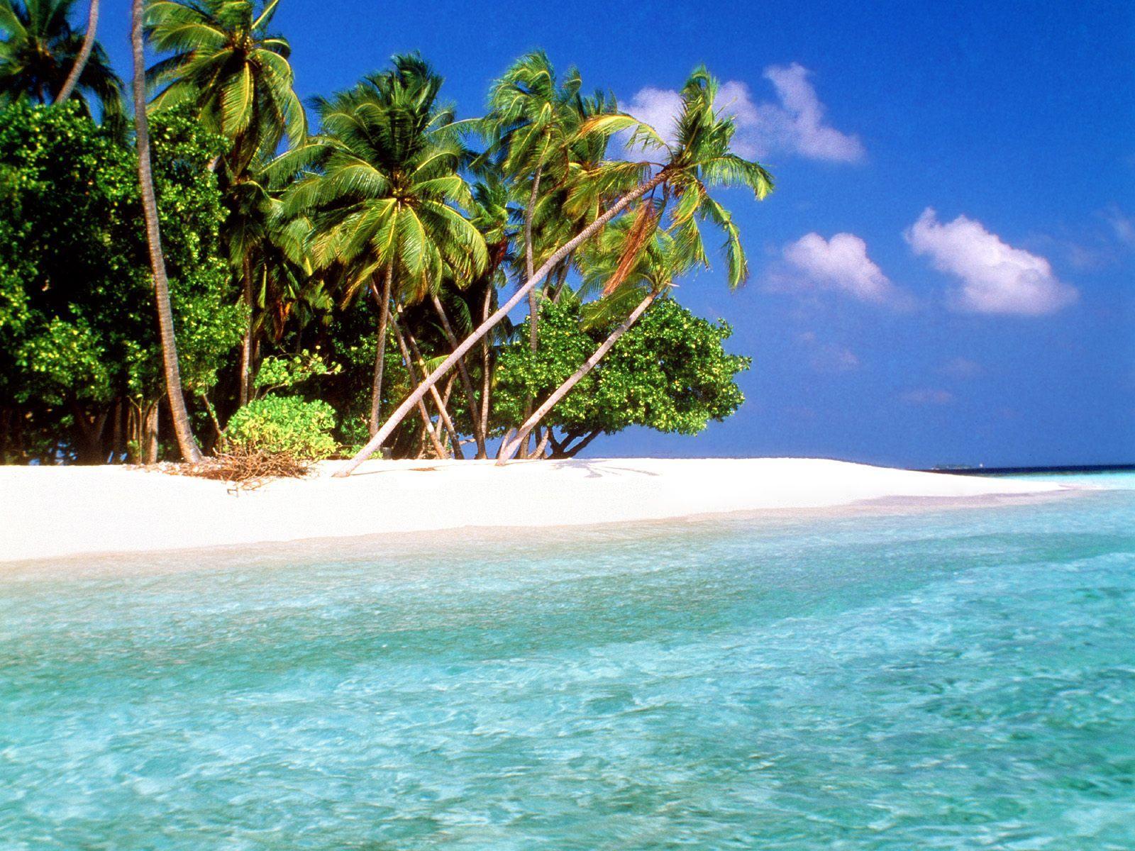 Wallpaper clipart tropical Wonderful beach Free  Wallpapers