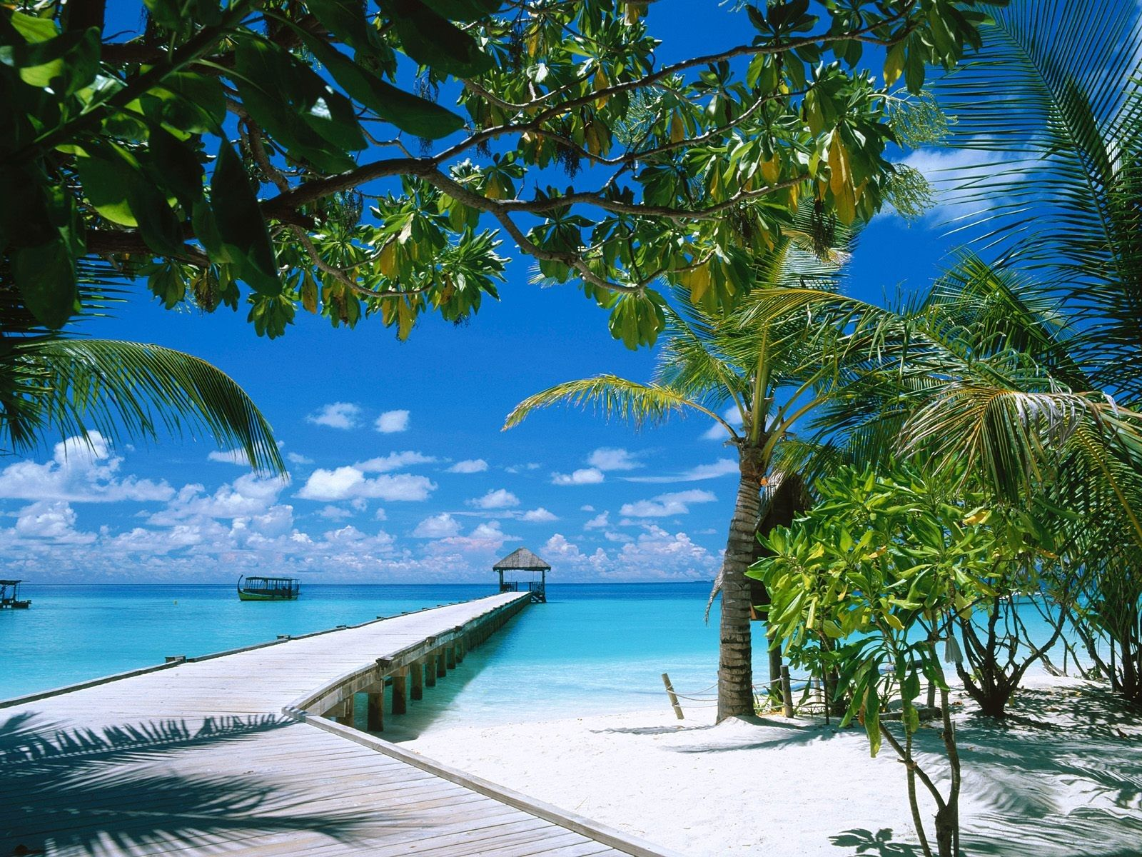 Wallpaper clipart tropical Island Island Clipart  Tropical