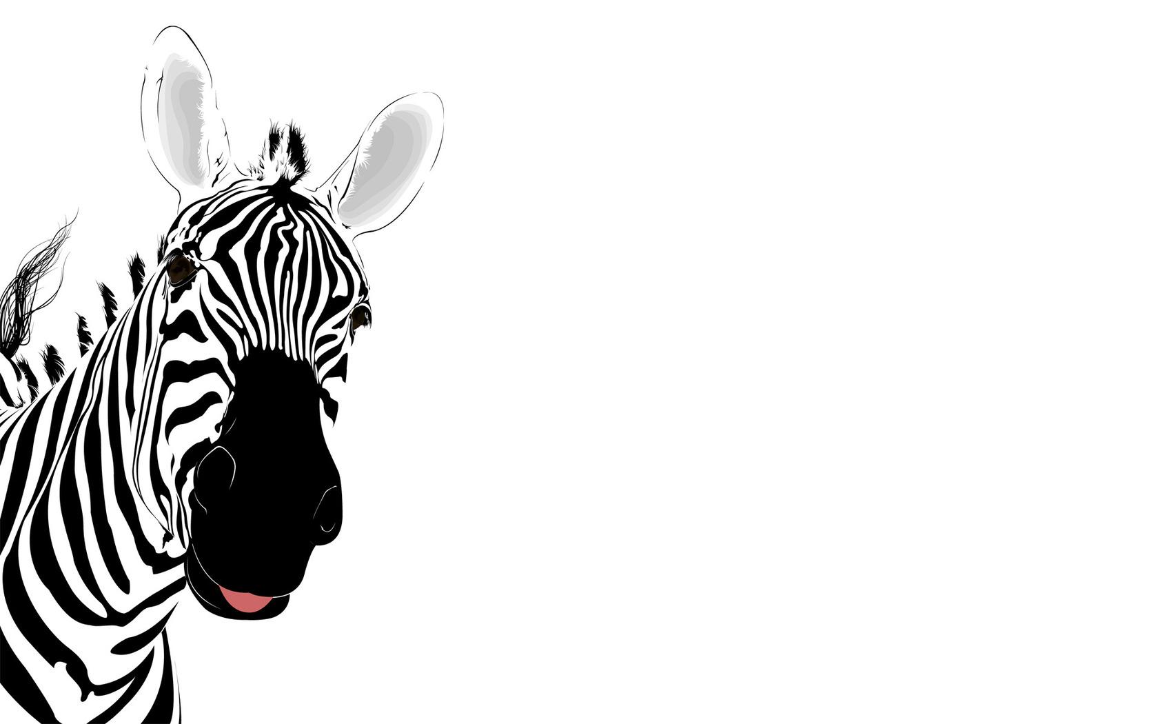 Zebra clipart wallpaper #7