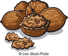 Walnut clipart #1 Walnut Walnut Download Download