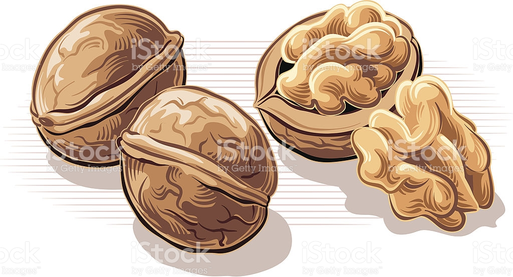 Walnut clipart And clip art 789 free
