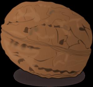 Walnut clipart Clip com vector Walnut at