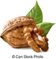 Walnut clipart Art Art Download Walnut Clipart