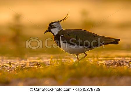 Warmth clipart morning sun Sun habitat bird wetland walking