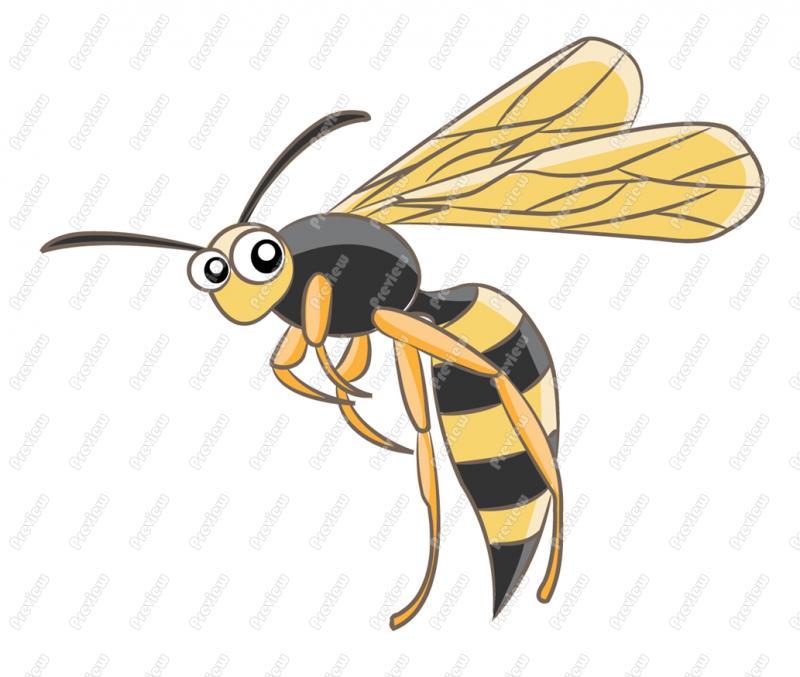 Wasp clipart Clipart Clipart Clipart Free Images