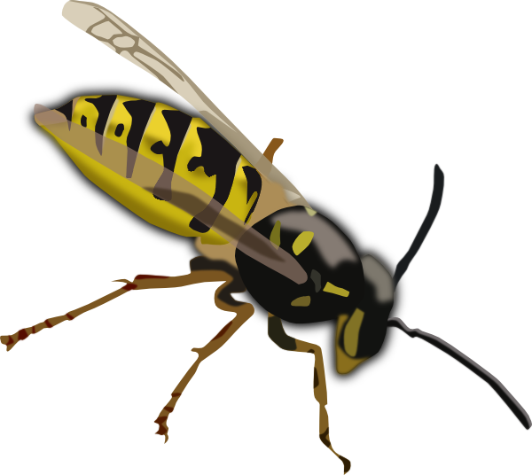 Wasp clipart Art Clipart Free Free Wasp