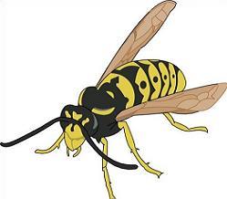 Wasp clipart Wasp Clipart Free Wasp