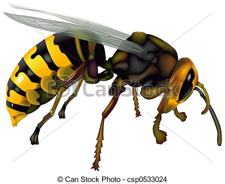 Hornet clipart wasp Detailed High  Stock (Vespa