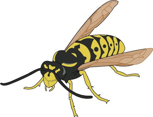 Hornet clipart wasp Threat  pose hornets and