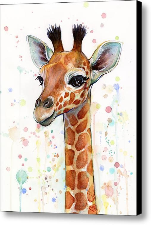 Drawn raccoon baby giraffe Giraffe Canvas Shvartsur Art Watercolor