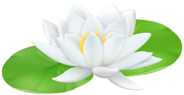 Water Lily clipart Lily Transparent Art PNG water