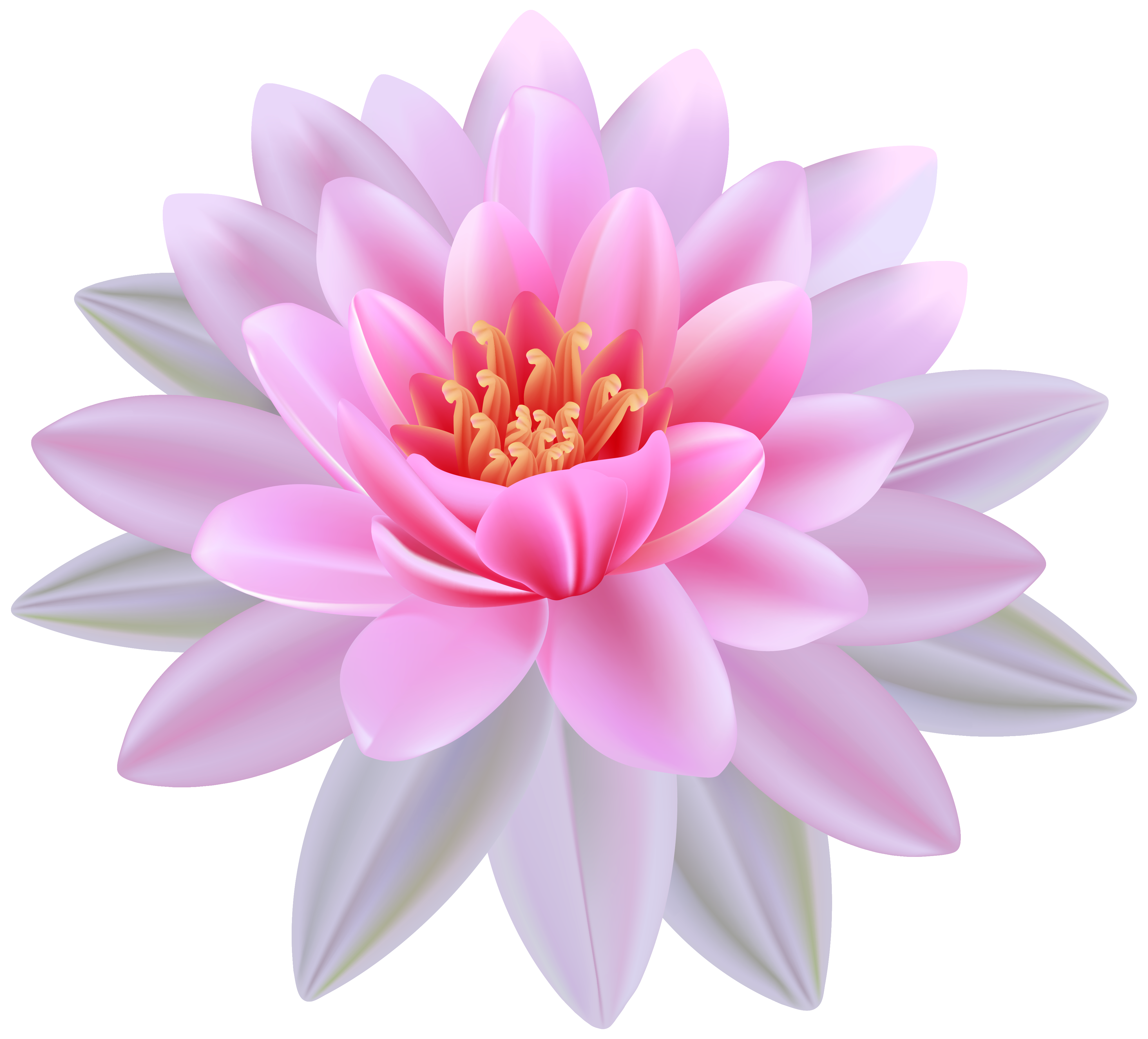 Water Lily clipart The Lily Water Clipart Cliparts