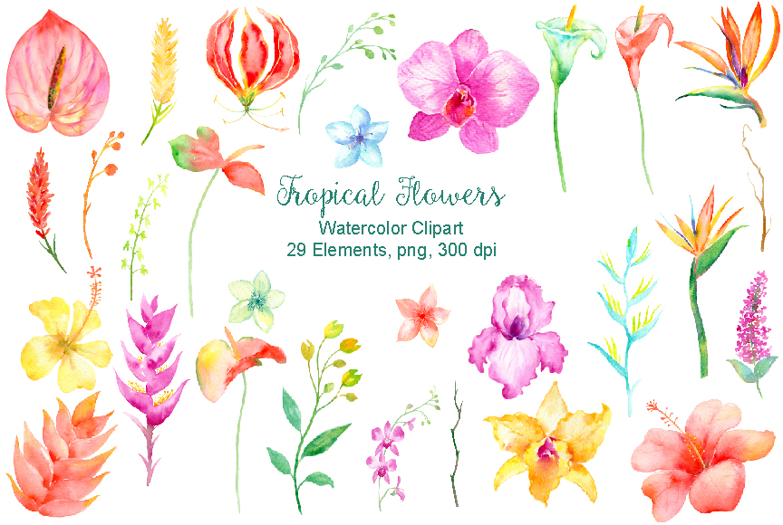 Watercolor clipart Tropical TheHungryJPEG Watercolor Collection Cornercroft