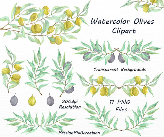 Branch clipart watercolor Olives Olives PNG tree Olive