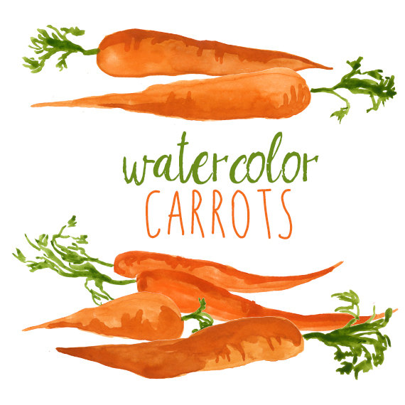 Carrot clipart watercolor Like Vegetable Carrots this Set
