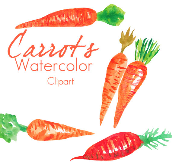 Carrot clipart watercolor Watercolor from Use  Carrots