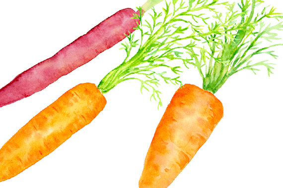 Carrot clipart watercolor This carrots file is Carrot