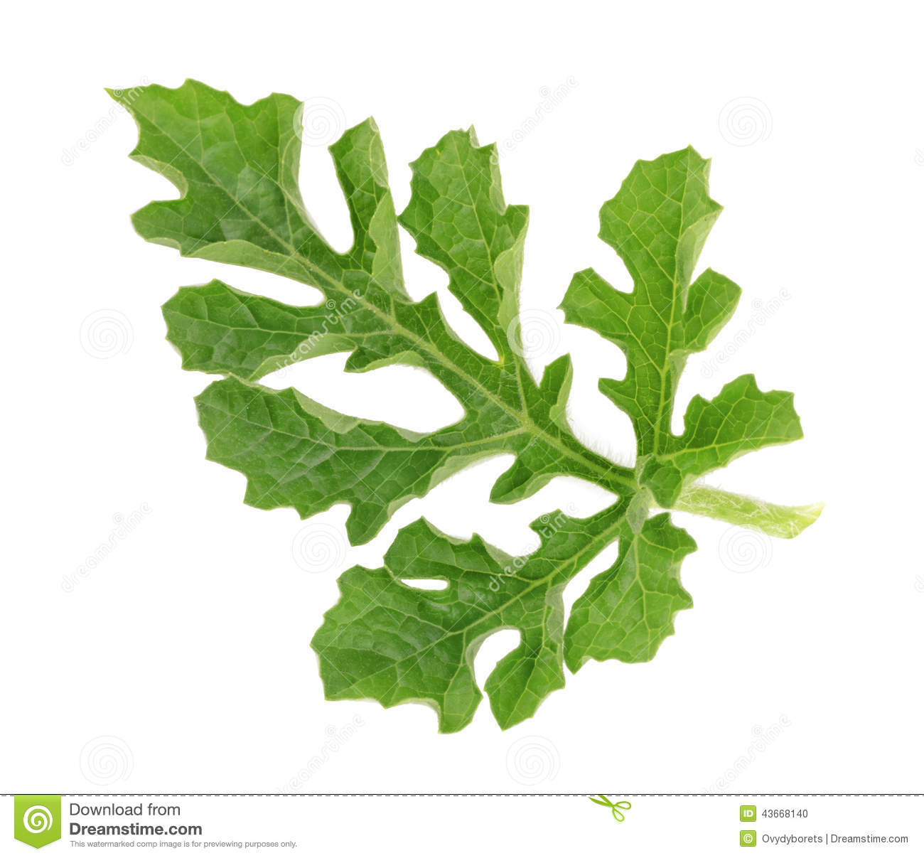 Watermelon clipart leaf On Leaves watermelon Clipart (15+)