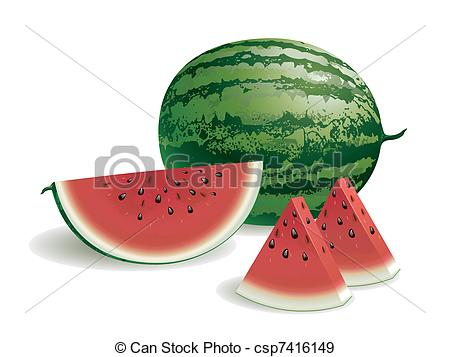 Watermelon clipart line drawing Vectors of Realistic Vector illustration