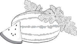 Watermelon clipart outline Of and Watermelon a Clipart