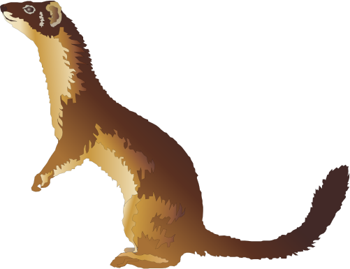 Weasel clipart Weasel Clip Panda Clipart Clipart