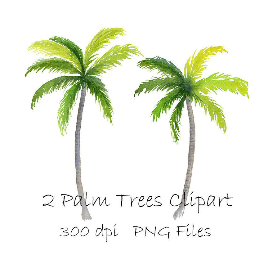 Wedding clipart palm tree Watercolor Palm Palm Tropical Watercolor