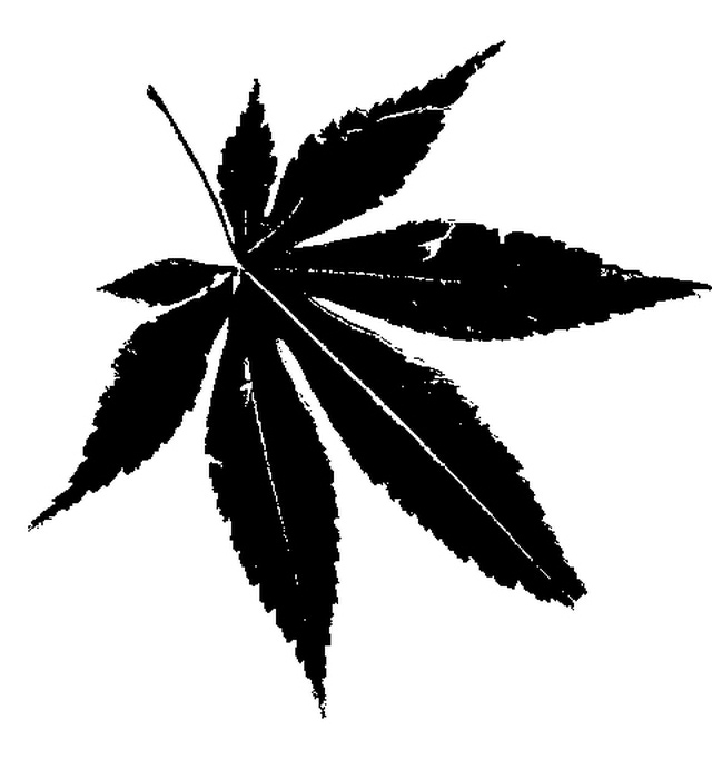 Weed clipart leaf silhouette A Silhouettes Trees? Japanese Make