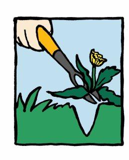 Weed clipart push pull Laidback Dandelion Gardener weeder weed