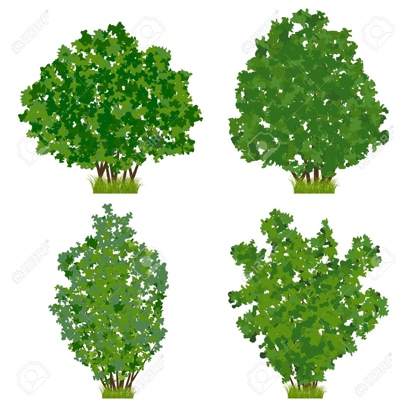 Shrub clipart shrubbery #14